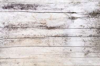 Tree structure knot wood pattern old wood grain texture hardwood joiner material plank driftwood