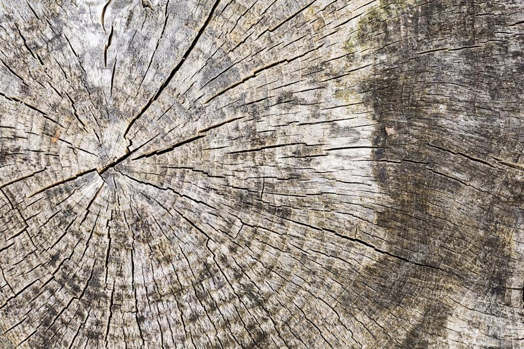 Pattern old wood grain texture hardwood year rings material plank driftwood