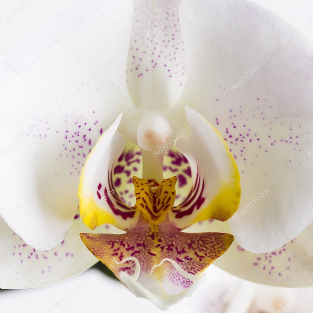 Weisse Orchidee Blume Flora Knopse Zimmer Blumen Dekoration Blumen