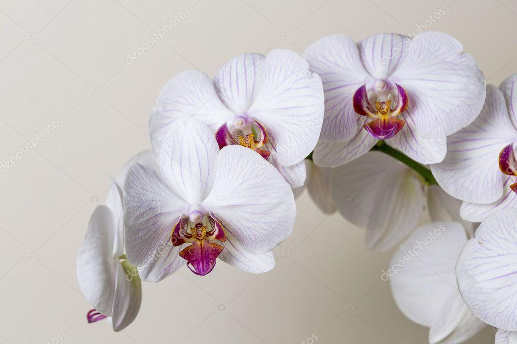 Pink orchid flower spa white flora flower gift cosmetics room decoration flower valentine