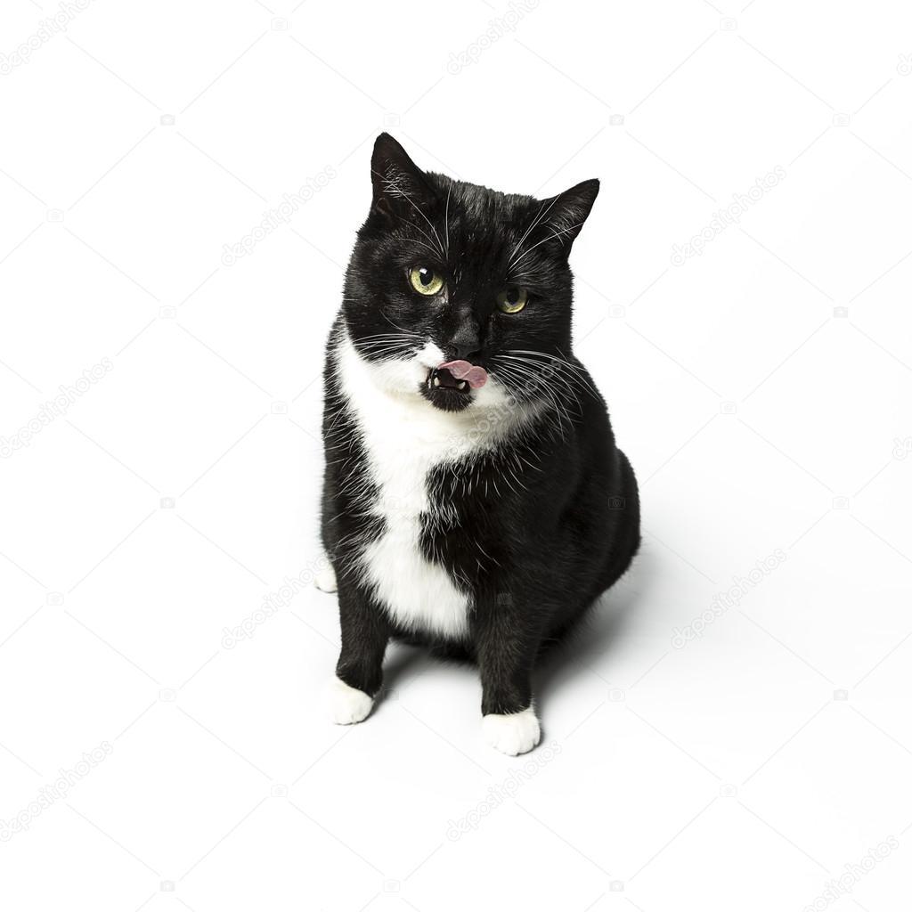 Domácí černá kočička