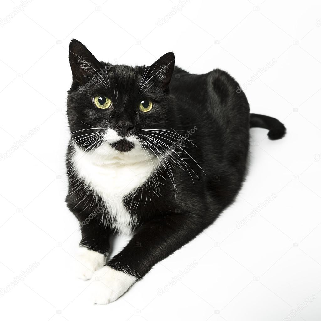 Černá kočka kočička fotky