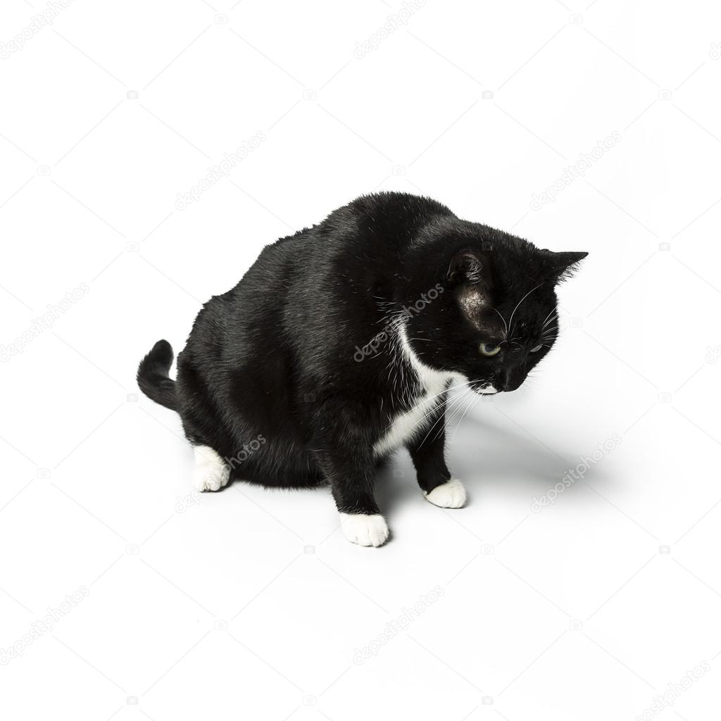 Domácí černá kočička obrázky