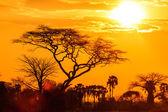 oranžové záři zapadajícího afrického slunce