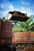 Hochladen von Palmölfrüchten
