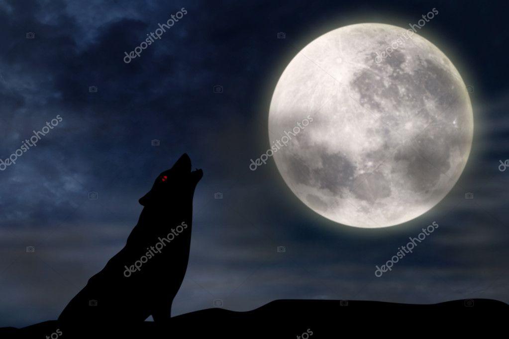 Lobo Aullando A La Luna Llena Fotos De Stock Realinemedia 12891189