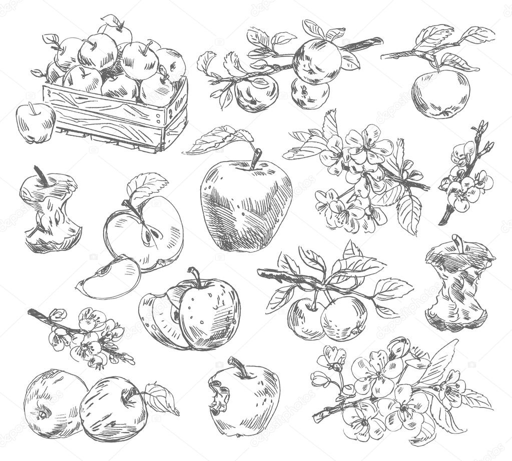 Freehand drawing apples
