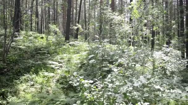 Lesní krajina