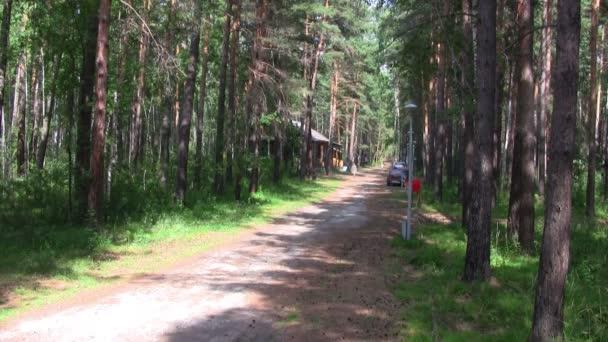 tűlevelű erdei út