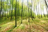 Fotografie lesní stromy