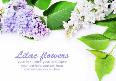 Beautiful Lilac Flowers stock vector