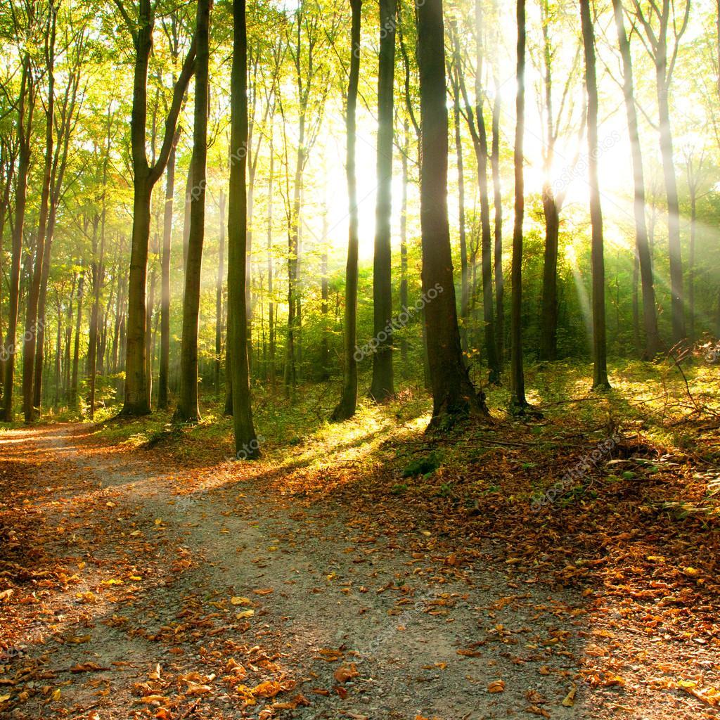 Фотообои Sun beams in foggy forest