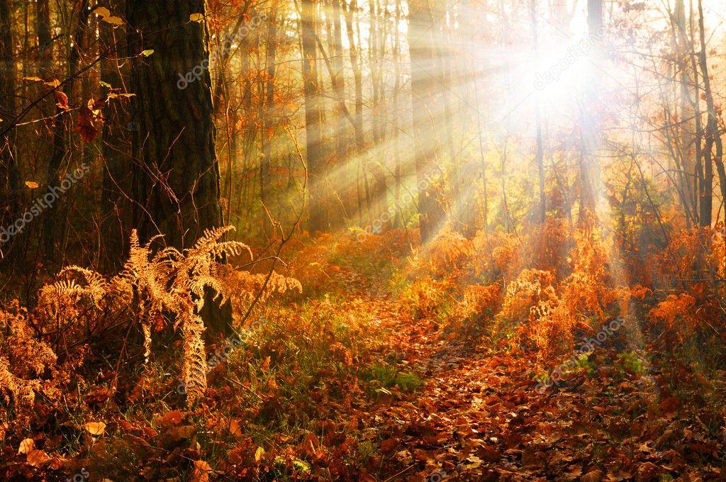 """Результат пошуку зображень за запитом """"пошуки в осінньому лісі"""""""