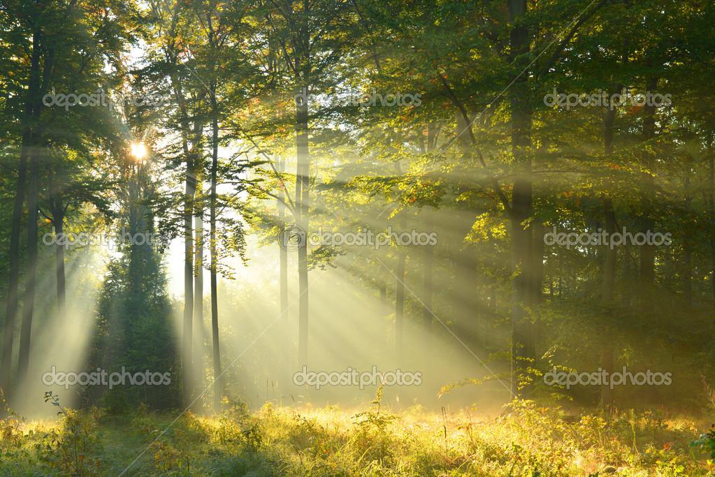Фотообои Осенний рассвет в лесу