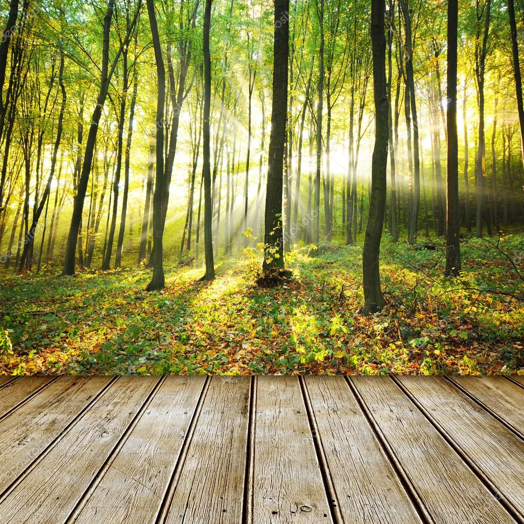 Forest background with empty table