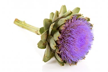 Isolated artichoke at white backgound