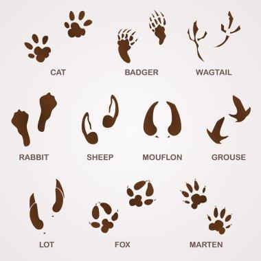 Wildlife Tracks