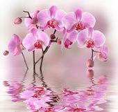 Fotografia orchidee rosa con riflessione di acqua