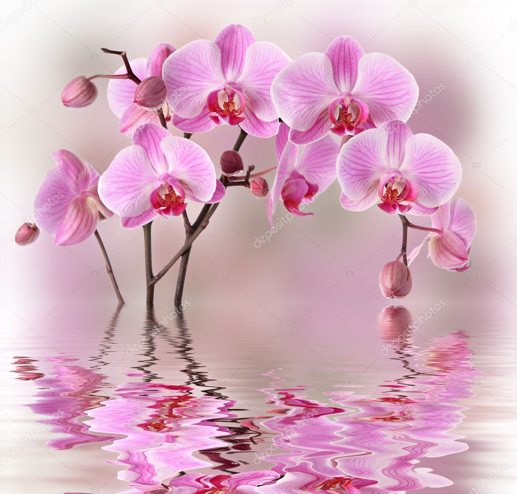 Pink orchids with water reflexion — Stock Photo © Pics4ads   -> Fototapety Kuchenne Storczyk
