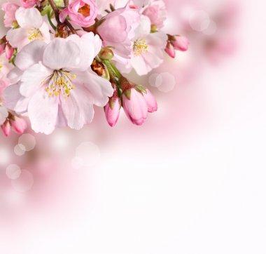 Pink spring blossom border background