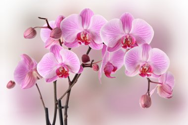 Pink orchids design