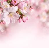Jarní pozadí s růžovými květy