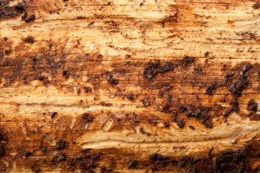 Muddy Wood Texture