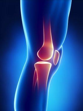 Human knee detailed view