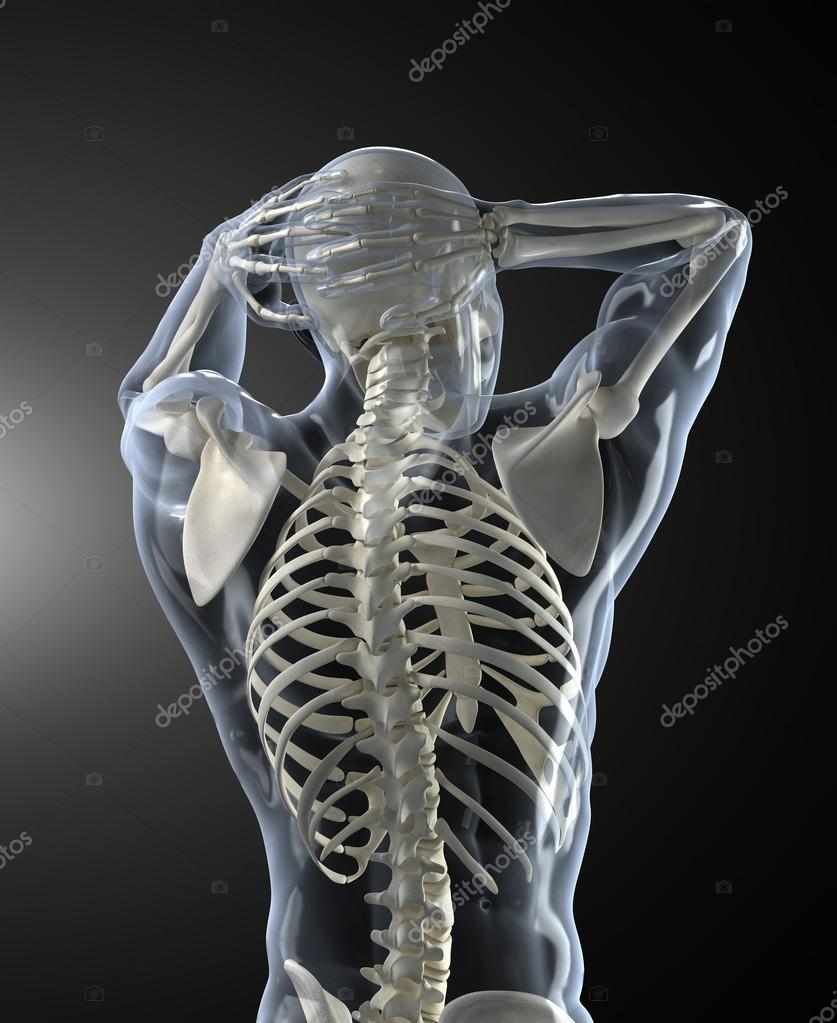 Human Body Medical Scan Back View Stock Photo Cliparea 13280512