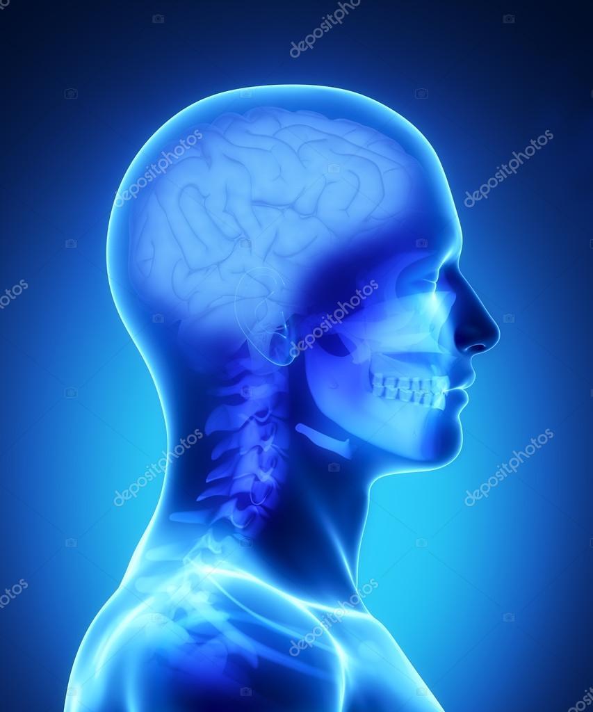 visión de rayos x de cerebro humano — Foto de stock © CLIPAREA #13281306