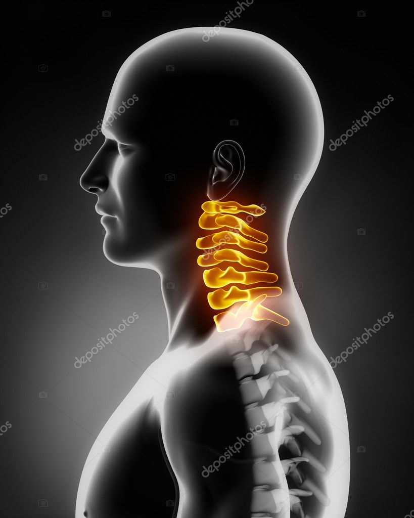 Cervical spine anatomy lateral view — Stock Photo © CLIPAREA #13282182