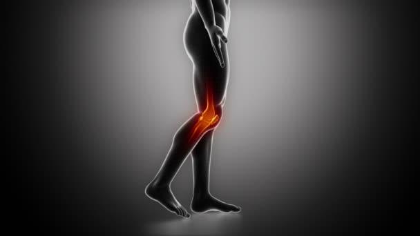 Knee anatomy in loop x ray stock video cliparea 13527948 knee anatomy in loop x ray stock video ccuart Choice Image