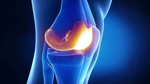 Meniscus medical anatomy in x ray knee stock video cliparea meniscus medical anatomy in x ray knee stock video ccuart Choice Image