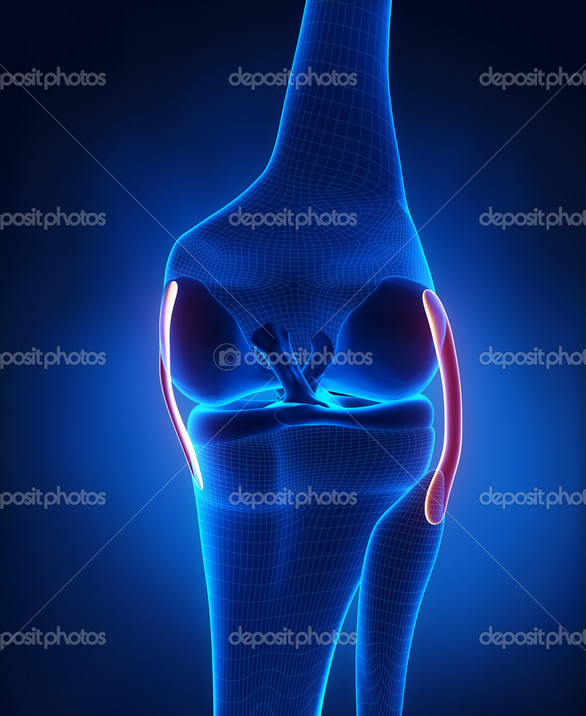 Knee ligaments anatomy — Stock Photo © CLIPAREA #21616487