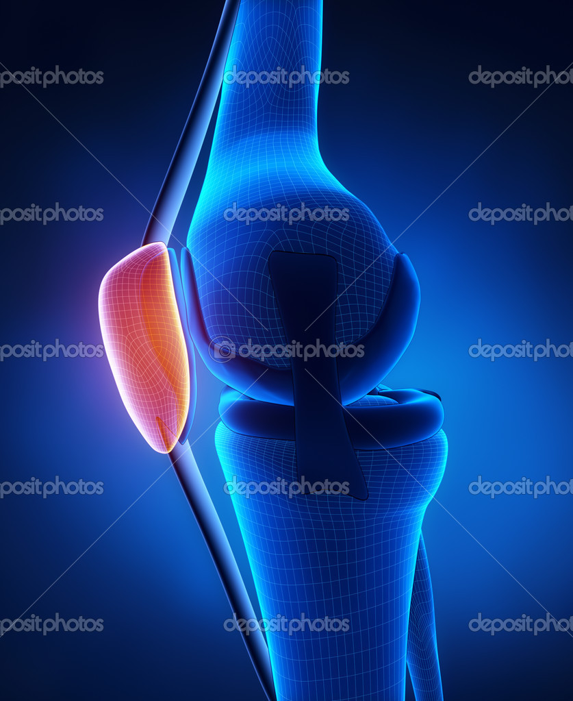 Anatomía de rótula de la rodilla — Fotos de Stock © CLIPAREA #21616527