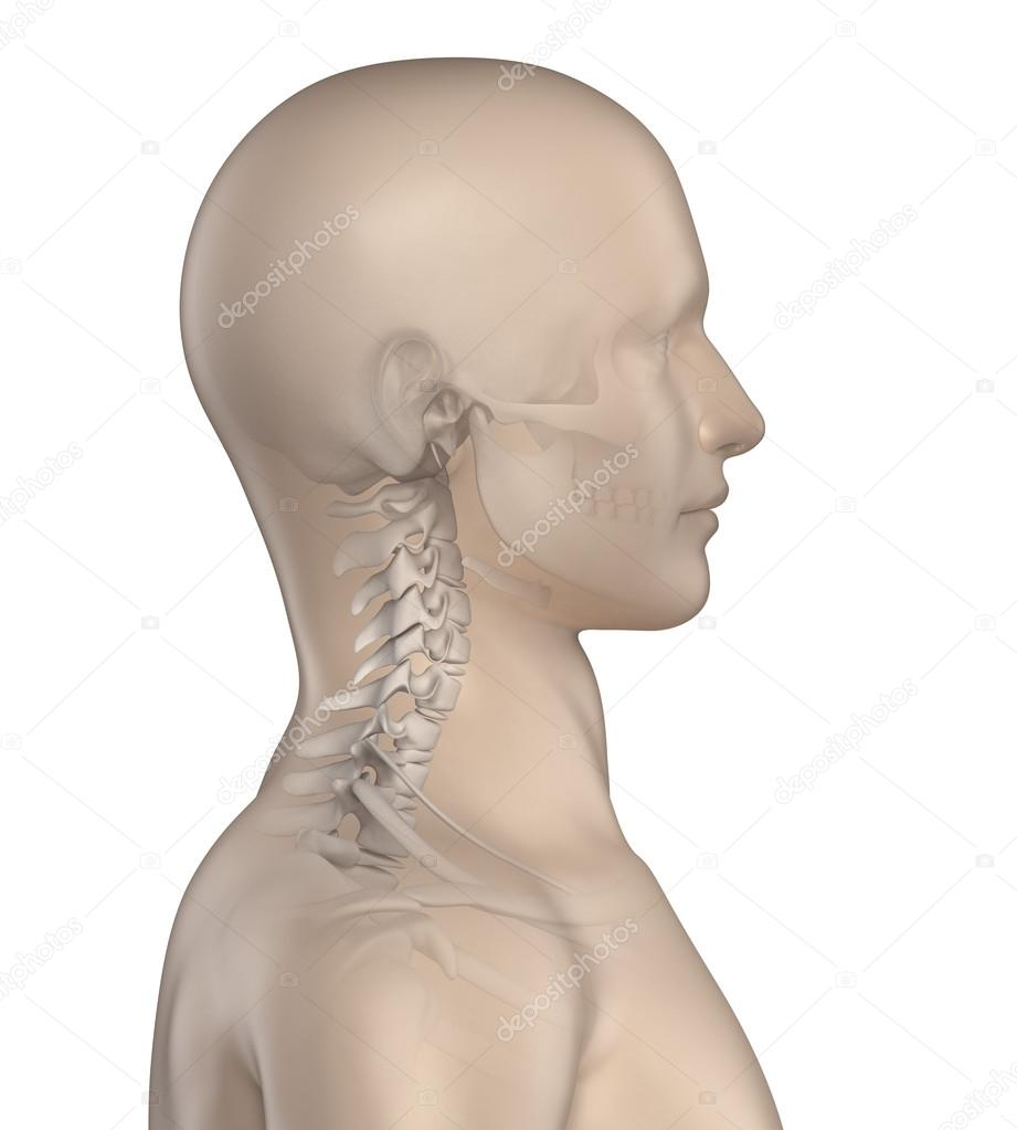 Kyphotic spine in cervical region phase 1 — Stock Photo © CLIPAREA ...