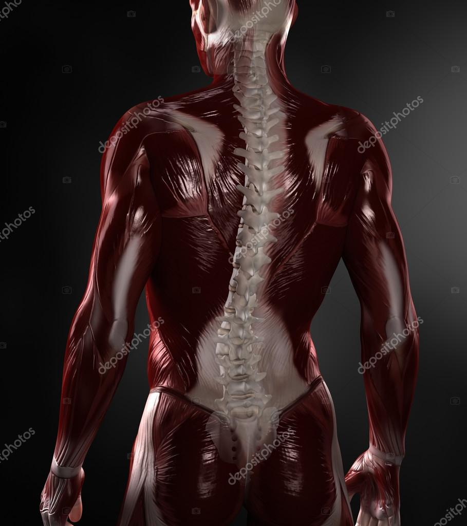 nackter Mann mit sichtbaren Muskeln und Wirbelsäule — Stockfoto ...