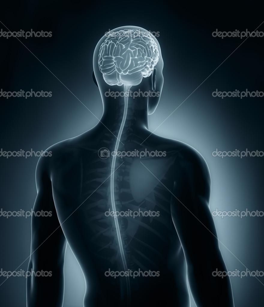 Gehirn und Rückenmark medizinische Röntgen-scan — Stockfoto ...