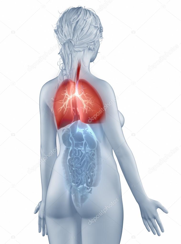 mujer de anatomía sistema respiratorio posición aislada vista ...