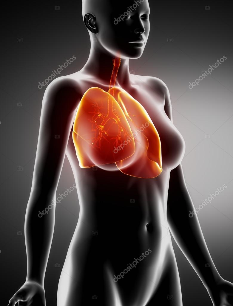 Female LUNGS and BRONCHUS anatomy x-ray lateral view — Stock Photo ...