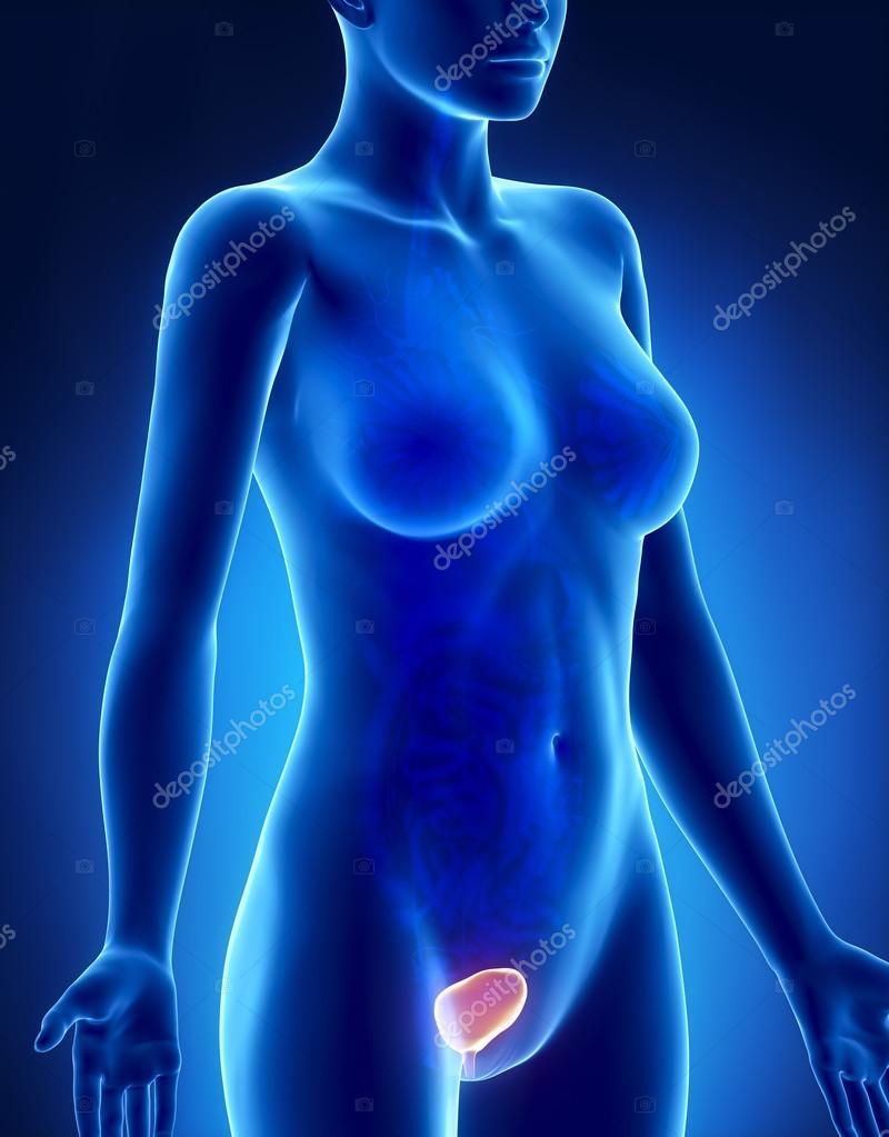 weibliche Blase Anatomie Röntgen Seitenansicht — Stockfoto ...