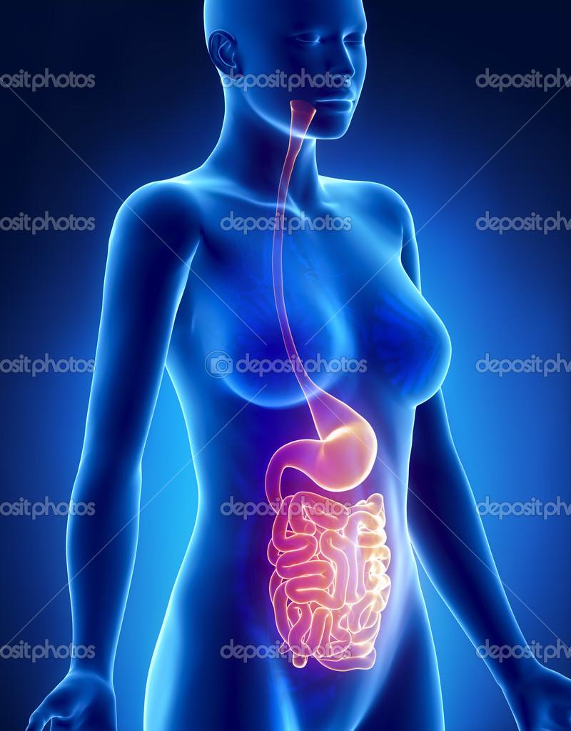 weibliche Magen und Lunge Anatomie Röntgen-Seitenansicht — Stockfoto ...