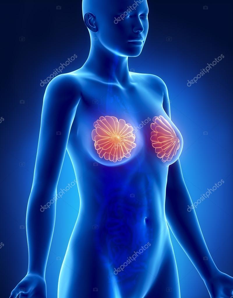 weibliche Brust-Anatomie-Röntgen-Seitenansicht — Stockfoto ...