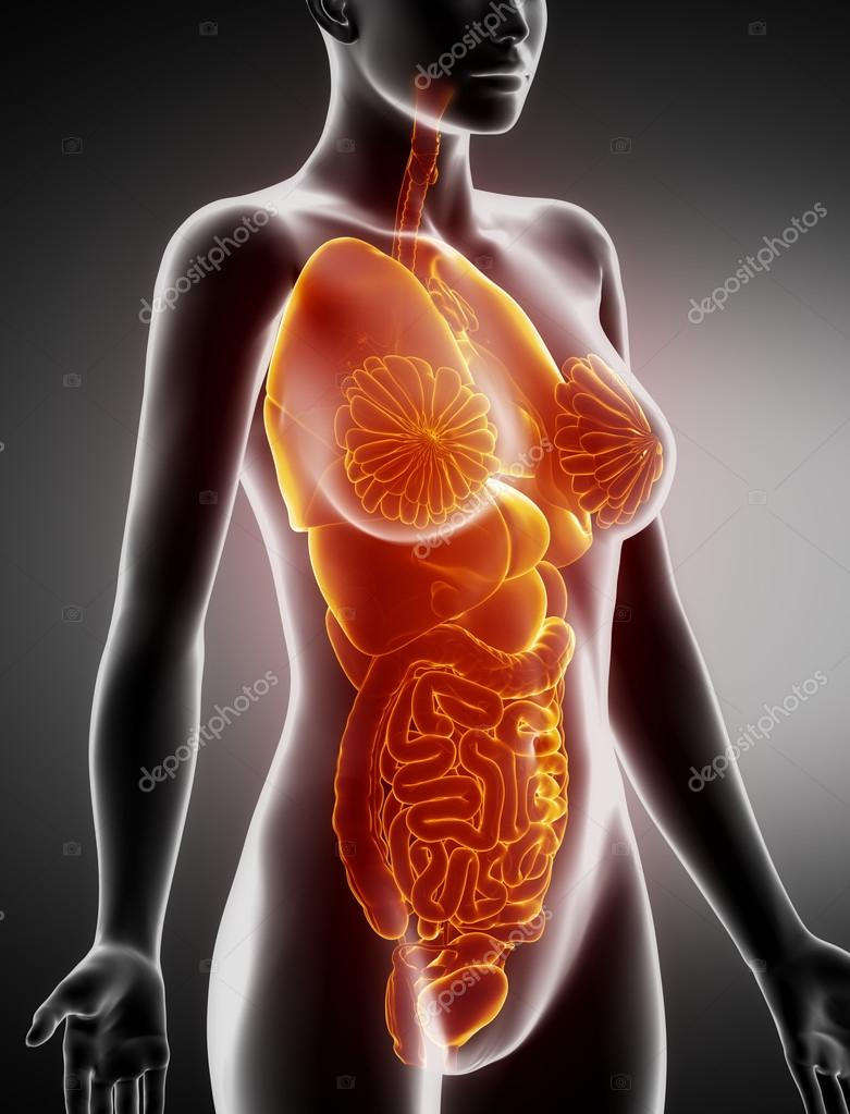 Female Organs Anatomy X Ray Lateral View Stock Photo Cliparea