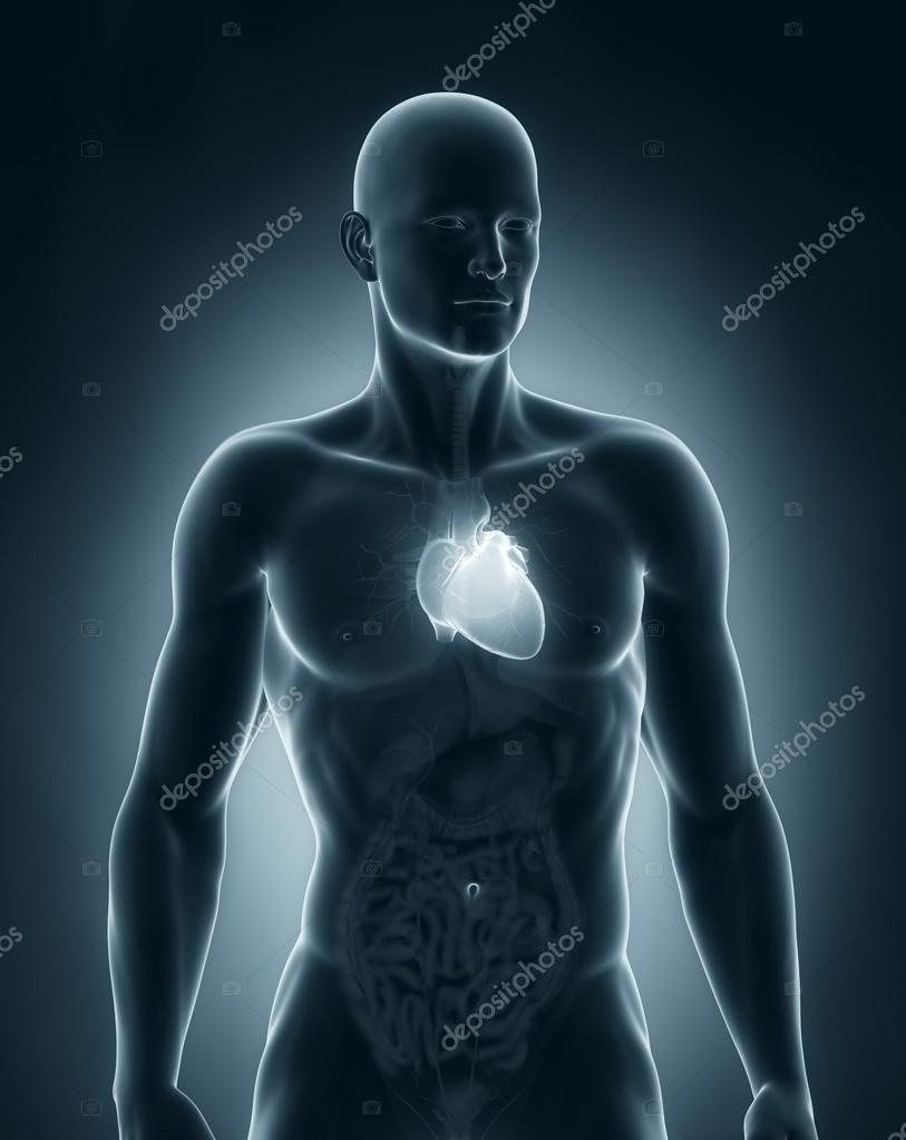 Man heart anatomy anterior view — Stock Photo © CLIPAREA #30588463