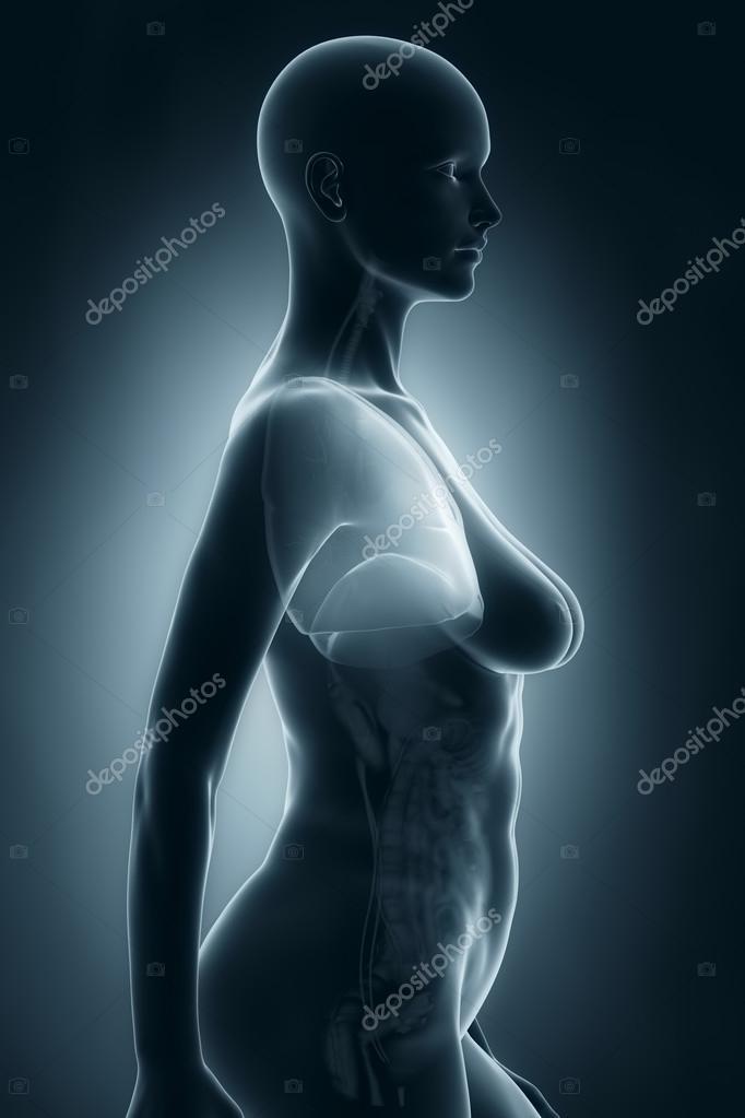 Frau Lunge Anatomie — Stockfoto © CLIPAREA #33810797