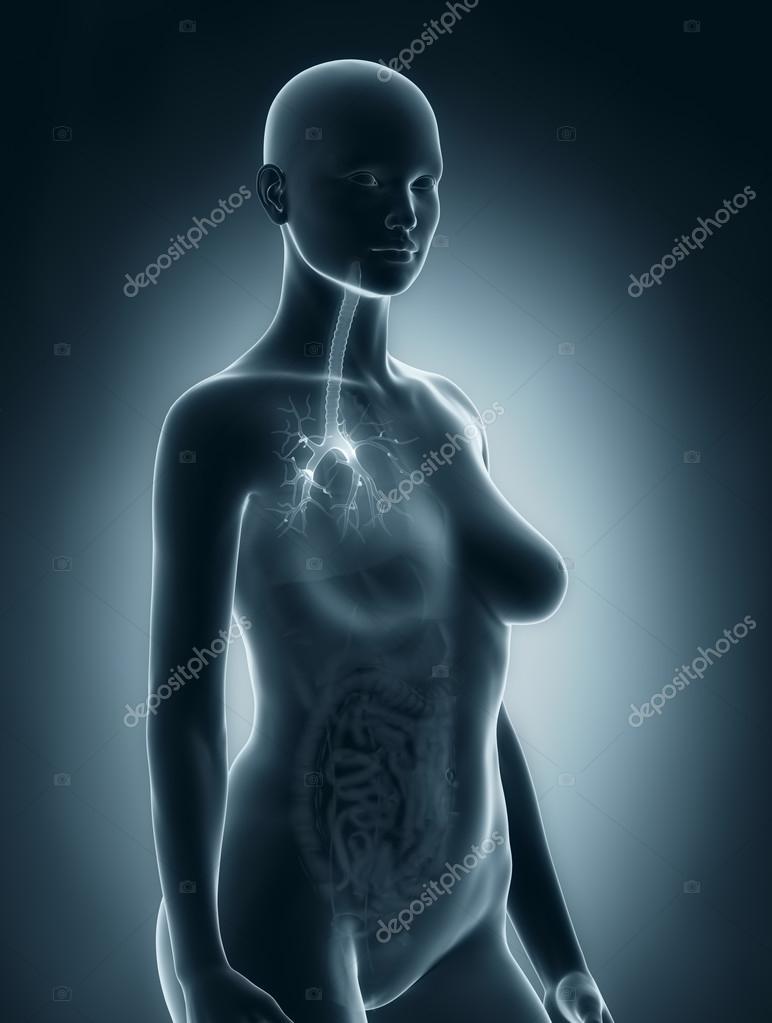 Frau Bronchialbaum Anatomie — Stockfoto © CLIPAREA #33811043