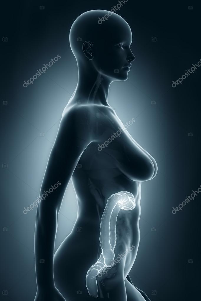 Frau Doppelpunkt Anatomie — Stockfoto © CLIPAREA #33811185