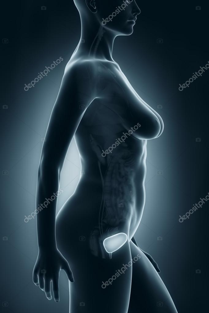 anatomía vejiga femenina — Foto de stock © CLIPAREA #33811345