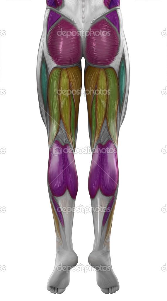 músculos de la pierna posterior masculino — Foto de stock © CLIPAREA ...